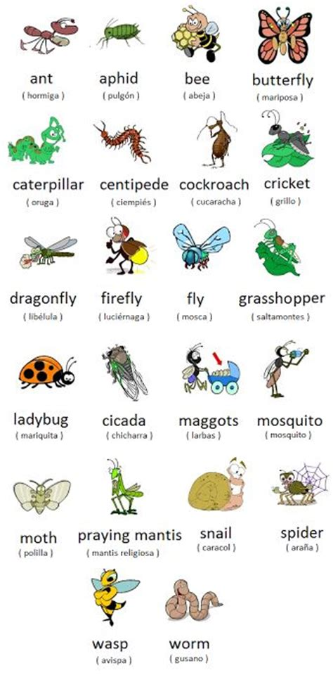 bed bug in spanish how do you say bed bugs in spanish 28 images how do