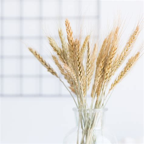 stems natural dried flowers decorative flowers wheat