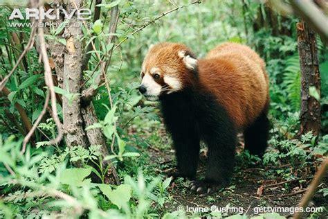 Floor Animals by Forest Floor Animals Www Pixshark Images Galleries With A Bite