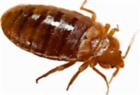 clear bed bugs jri kill bed bug instantly powerful technology kills