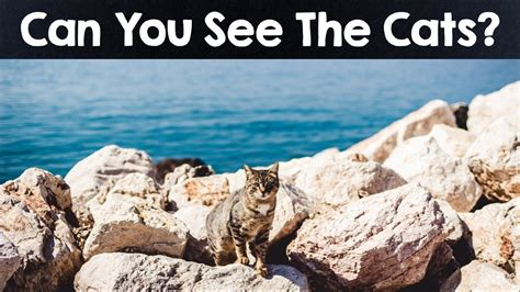Can See What You Search On Nobody Can See All The Animals Optical Illusions