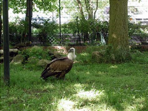 zoologischer garten routenplaner anreise zum zoo eberswalde f 246 rderverein des zoologischen