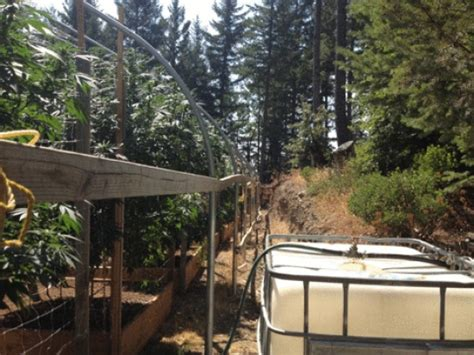 Humboldt County Superior Court Search Another Burr Valley Marijuana Grow Site Raid Lost Coast Outpost Humboldt County