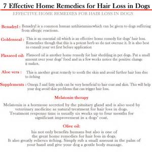 home remedys for dogs losing hair hair loss help
