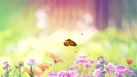butterfly wallpaper for desktop with animation download butterfly paradise animated wallpaper