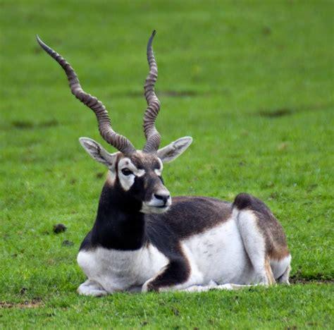 pakistan flora  fauna de pakistan parques nacionales  declarados de interes por la unesco