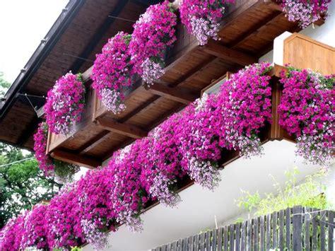 fiori sui balconi fiori consigli per il tuo giardino