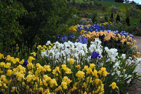 Iris Flower Garden Growing Irises All Season Garden Design For Living