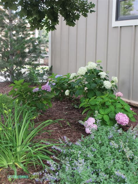 front yard landscaping with hydrangeas some hydrangea and random landscaping thoughts