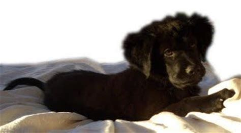 puppy personality test 17 best images about temperament testing on assessment logos and