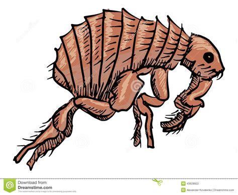 doodle bug bite flea stock vector image 43628922