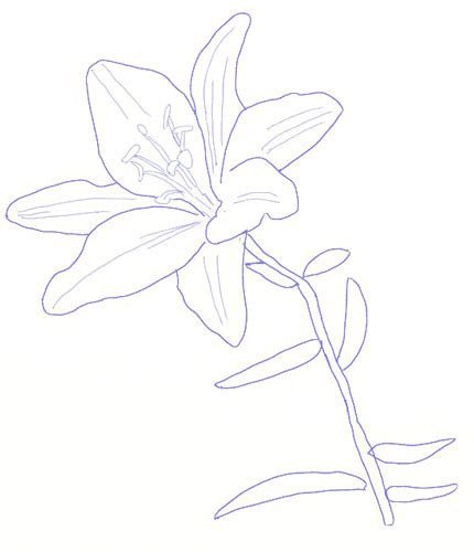 how to draw hands by lily draws on deviantart lilies drawing images pictures becuo how to draw a lily