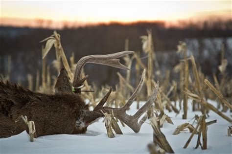 deer attacks bowhunting for whitetail deer bowhunt 101