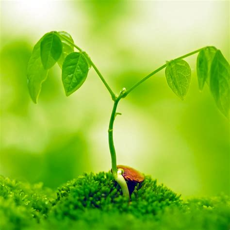 beautiful house plants photo picture 2022 beautiful green wallpapers high definition clipgoo