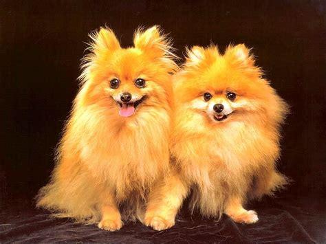 cute dog wallpaper dogs wallpaper  fanpop
