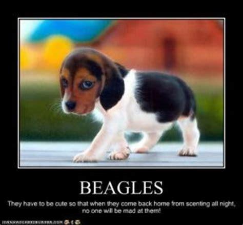 Beagle Meme - beagle jokes kappit