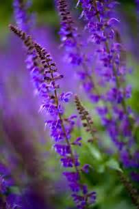 plant with purple flowers purple flowers