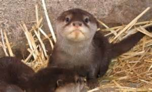 otter you looking at the many faces of a cute mammal