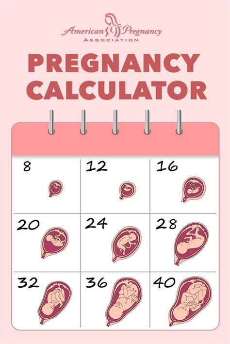 pregnancy dating chart