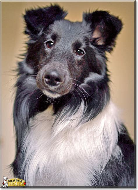 golly there goes olly olly s green carpet adventure volume 1 books shetland sheepdog march 3 2015
