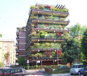 alberi da terrazzo soleggiato quali arbusti e piante da foglia o da fiori mettere sul