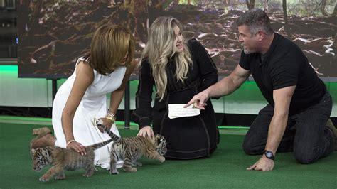 hoda kotb kelly clarkson see kelly clarkson and hoda kotb meet baby tigers wolf