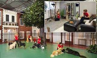 Canadian Floor Plans jet pet resort recognized as most luxurious pet hotel in world
