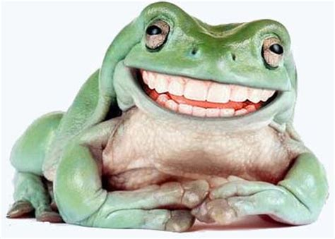 smiling frog wallpapers high quality