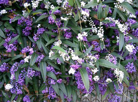 fiori nord giardinaggio piante ricanti quali al nord e al sud