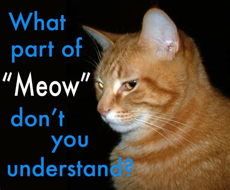 Meow Meme - is meme translation on topic english language usage