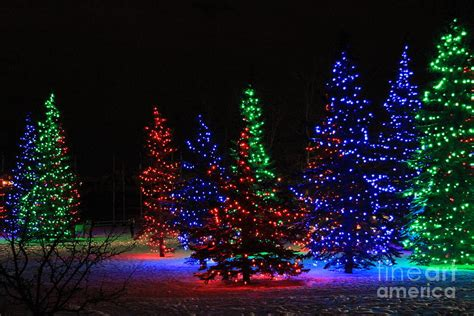 tree lights photograph by helen bobis
