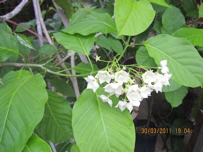 Nutris Unt Daun Akar Buah Bunga2bungkus yan s family frens travel and food journal bunga bunga di taman