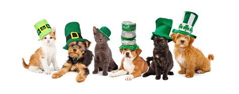 day puppies st patricks day pets play