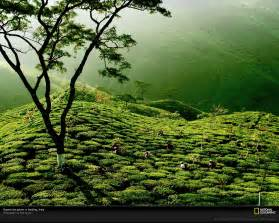 beautiful green tea gardens hd wallpapers desktop wallpapers