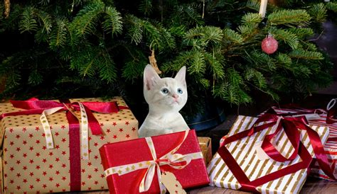 images gifts kitty cat kitten pet animal cute feline surprise  wishes loop