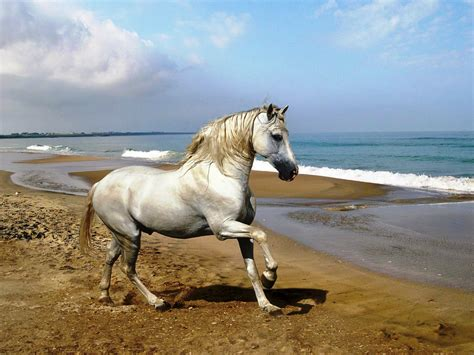 wallpaper horse free download horse hd wallpaper free download animals wallpapers hd