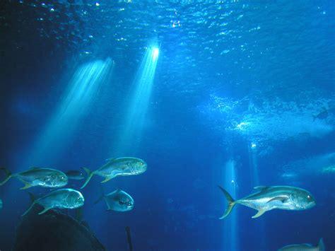 imagenes sorprendentes del oceano 8 de junio d 237 a internacional de los oc 233 anos