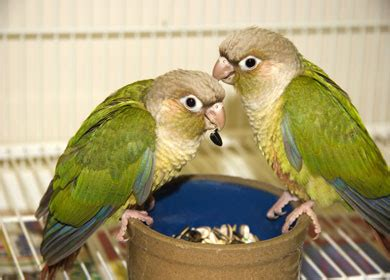what should i feed my pet bird river road pet clinic