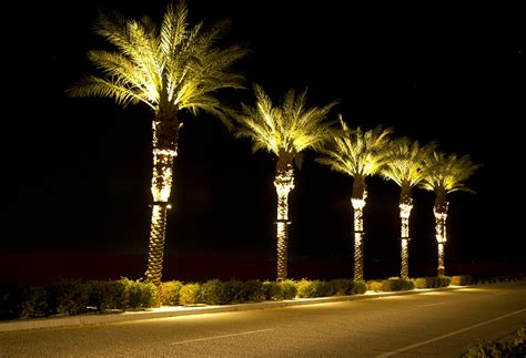 Stella Led Palm Tree Light Bradley Lighting Tree Lights