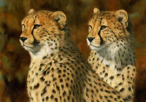 Cheetah Print Duvet Cheetah Brothers Painting By David Stribbling