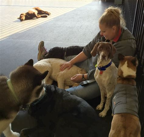 places to board dogs near me doodle daycare boarding and grooming 11 photos pet boarding pet sitting
