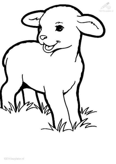free to draw sheep coloring pages