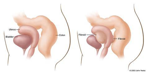 uterus bladder diagram uterus bladder diagram 28 images diagram of bladder