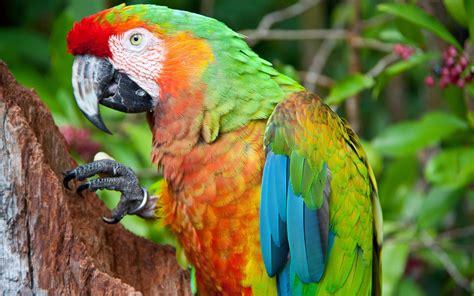 Eagle Flamingo Grey Orange birds colorful parrot blue green orange feathers tree