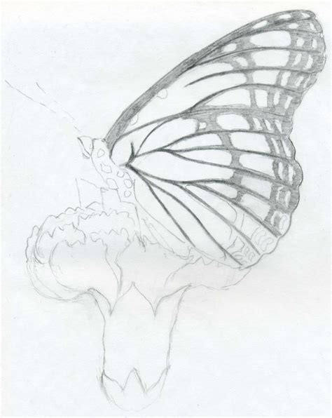 Sketches And Drawings by Butterfly Pencil Drawings You Can Practice