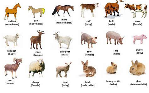 imagenes animales ingles hermosas im 225 genes de animales dom 233 sticos en ingles para