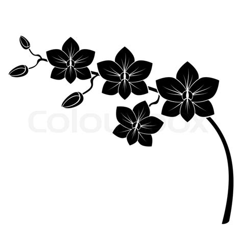 orchid branch silhouette vector for design stock vector