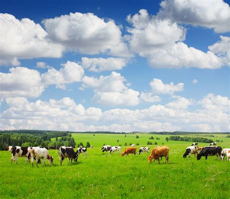 cows save the planet and other improbable ways of restoring soil to heal the earth books how cows save soil environmental