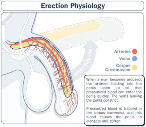 creatine erectile dysfunction arginine and erectile dysfunction opinion in urology