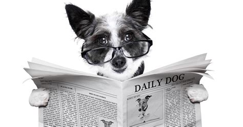 how many words can a learn how many words can dogs learn